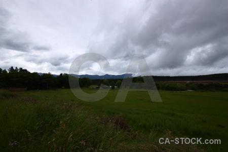 Cloud tree landscape grass sky.