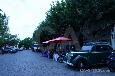 Cobble car tree road colonia del sacramento.