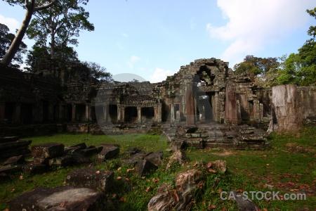 Column fungus khmer angkor tree.