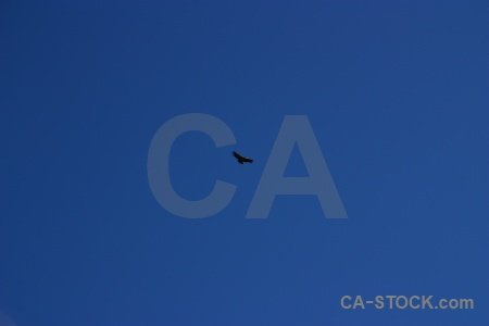 Condor animal peru sky south america.