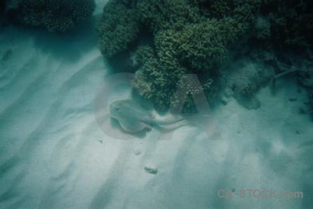 Coral fish reef animal underwater.