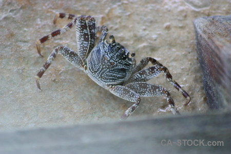 Crab gray shell animal.