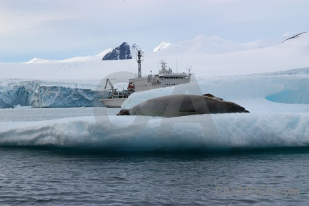 Crabeater ice south pole akademik ioffe water.