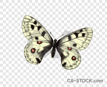 Cut out animal butterfly transparent insect.