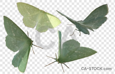 Cut out transparent animal insect butterfly.