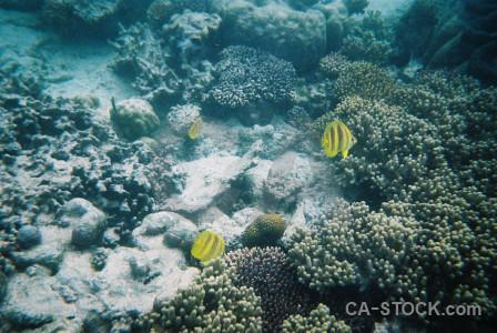 Cyan animal reef fish coral.
