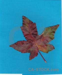 Cyan leaf.