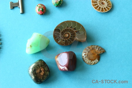 Cyan polished ammonite object green.