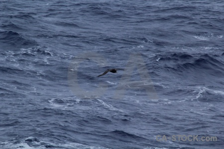 Day 3 drake passage bird animal sea.