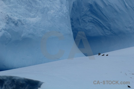 Day 4 penguin animal iceberg antarctica cruise.
