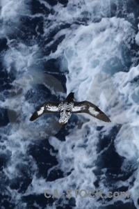 Day 4 petrel water antarctica cruise wave.