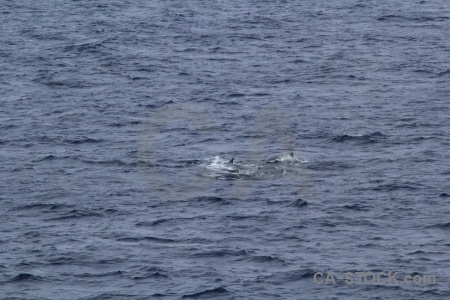Day 4 water drake passage antarctica cruise sea.