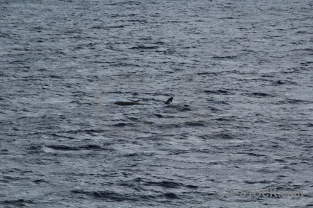 Day 4 water drake passage sea whale.
