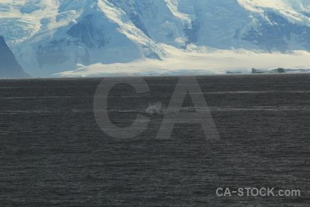Day 6 ice marguerite bay adelaide island sea.