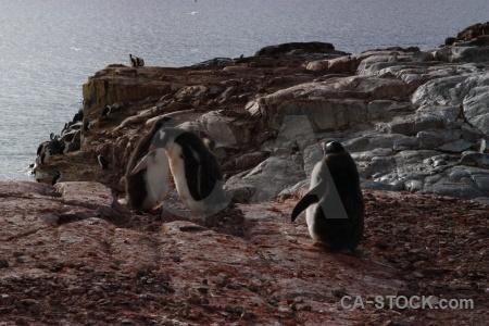 Day 8 antarctica cruise water chick.