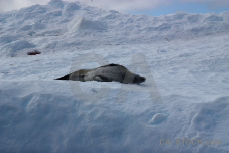 Day 8 south pole wilhelm archipelago iceberg snow.