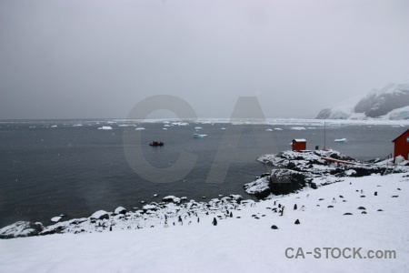 Day 9 antarctic peninsula brown station gentoo ice.