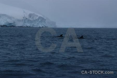 Day 9 whale antarctic peninsula wilhelm archipelago snow.