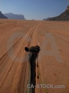 Desert camel sand middle east western asia.