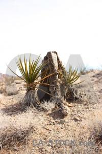 Desert white landscape.
