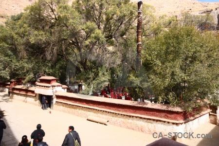 Dhonka tibet monastery tree sera.