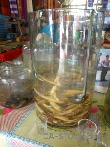 Donsao southeast asia laos whiskey snake.