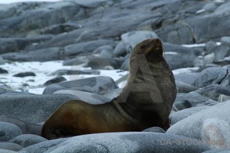 Dorian bay palmer archipelago seal stone day 10.