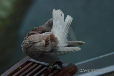 Dove animal bird pigeon.
