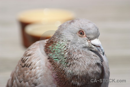 Dove animal pigeon bird gray.