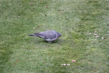 Dove animal pigeon grass bird.