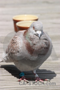 Dove animal pigeon gray bird.