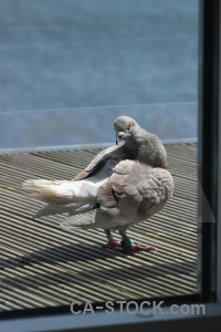 Dove pigeon animal bird.