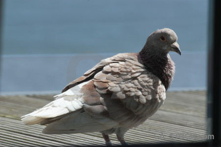 Dove pigeon bird animal.