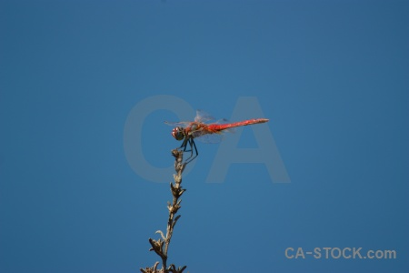 Dragonfly sky wing javea branch.