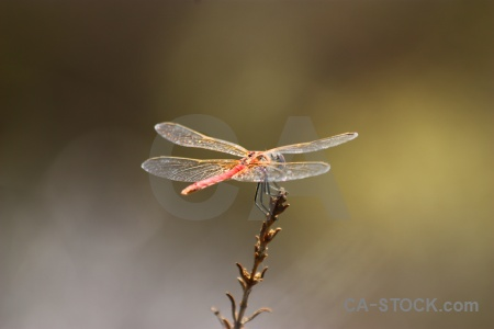 Dragonfly wing animal europe javea.