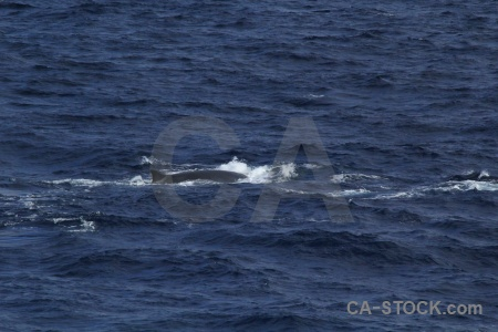 Drake passage water animal day 4 sea.