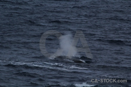Drake passage whale day 4 spray sea.