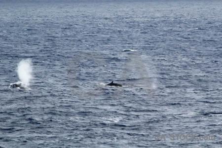 Drake passage whale spray day 4 sea.