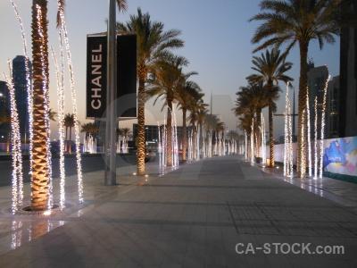 Dubai uae middle east asia palm tree.