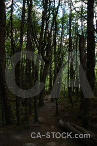 El chalten south america tree patagonia moss.