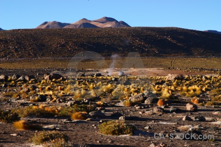 El tatio south america mountain bush atacama desert.