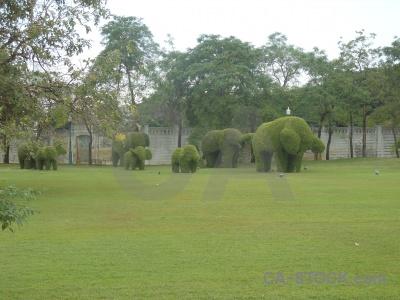 Elephant thailand sky grass southeast asia.