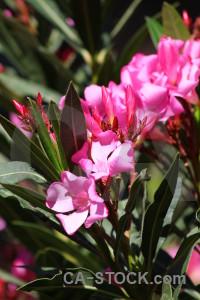 Europe algar plant red pink.