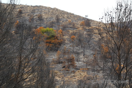 Europe ash javea spain burnt.