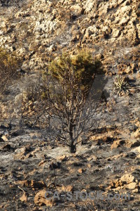 Europe ash spain javea burnt.