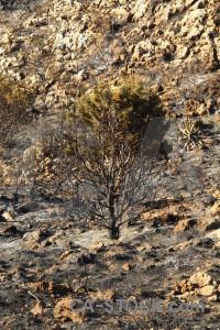 Europe ash spain javea burnt.