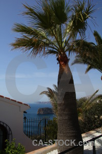 Europe blue spain palm tree javea.