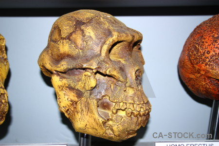 Europe brown cueva de las calaveras spain orange.