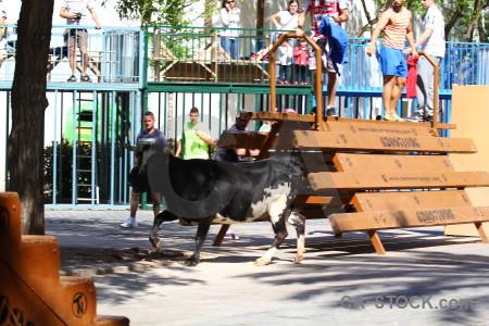 Europe bull running javea white person.