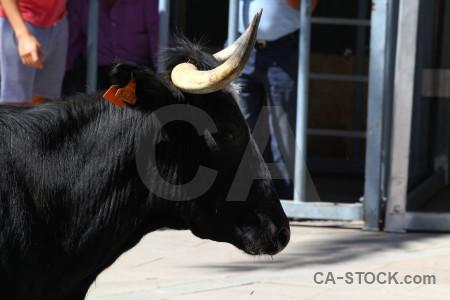 Europe bull white spain running.